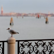 Venice - St Mark's basin at dawn, color landscape photo