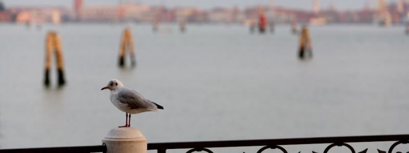 Venice - St Mark's basin at dawn, color landscape photo