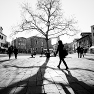Venice - big tree in Campo S. Margherita, black and white landscape photo