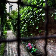 Venice - garden in bloom in sestiere of S. Croce, color landscape photo